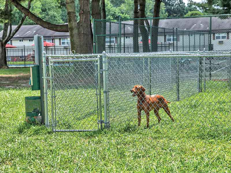 Enclosed community dog park at Cedar Brook Apartments